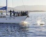 Segeltörn Haida Gwaii - 10-Tage Paket