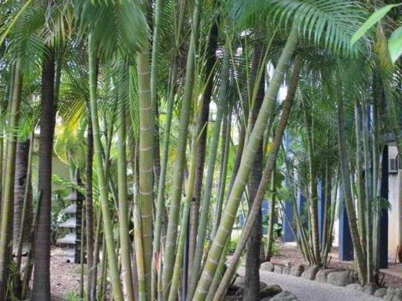 Bohemia Resort Cairns Garten